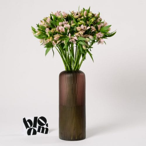 Subscription Flower for the Week - Alstroemeria