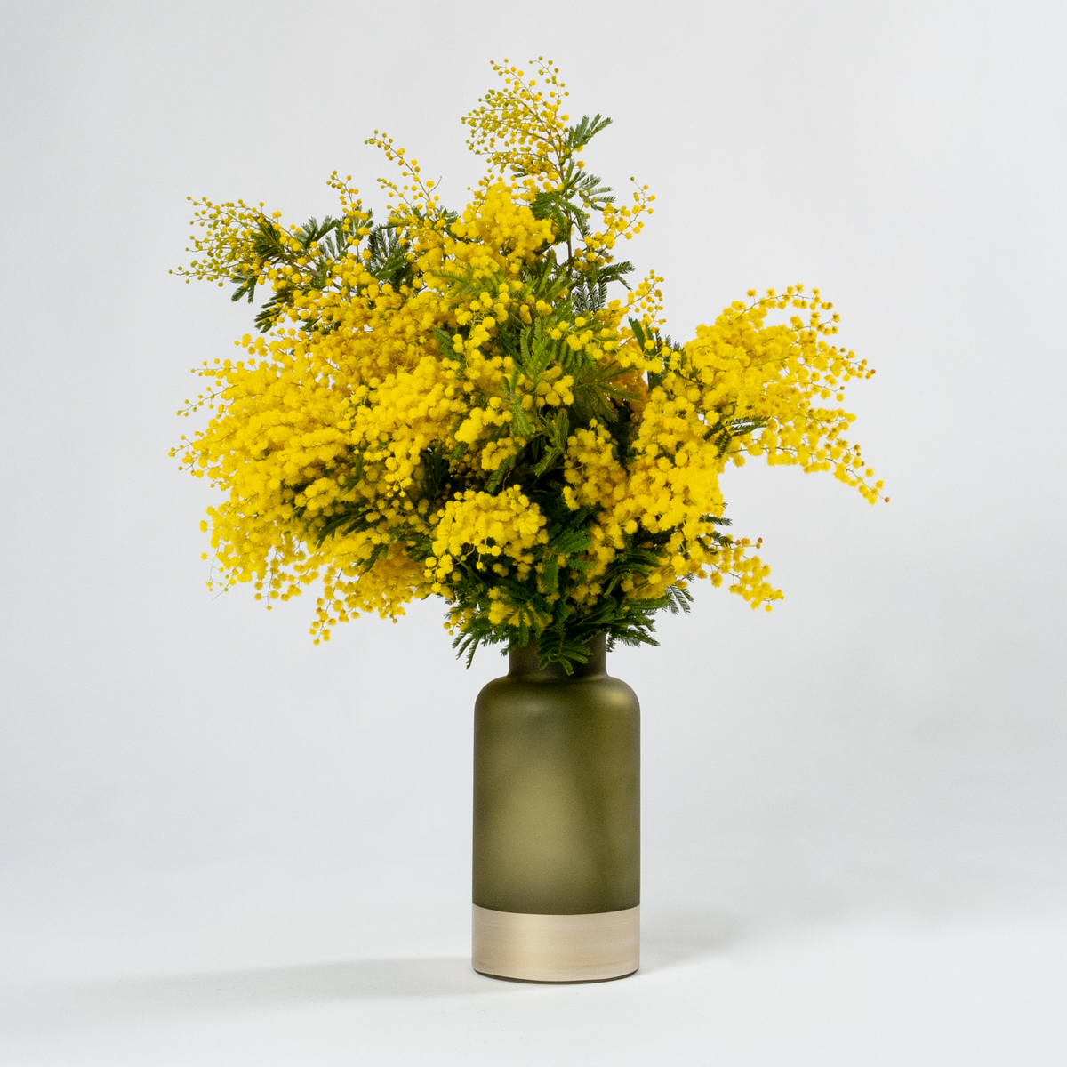 Subscription Flower for the Week - Mimosa